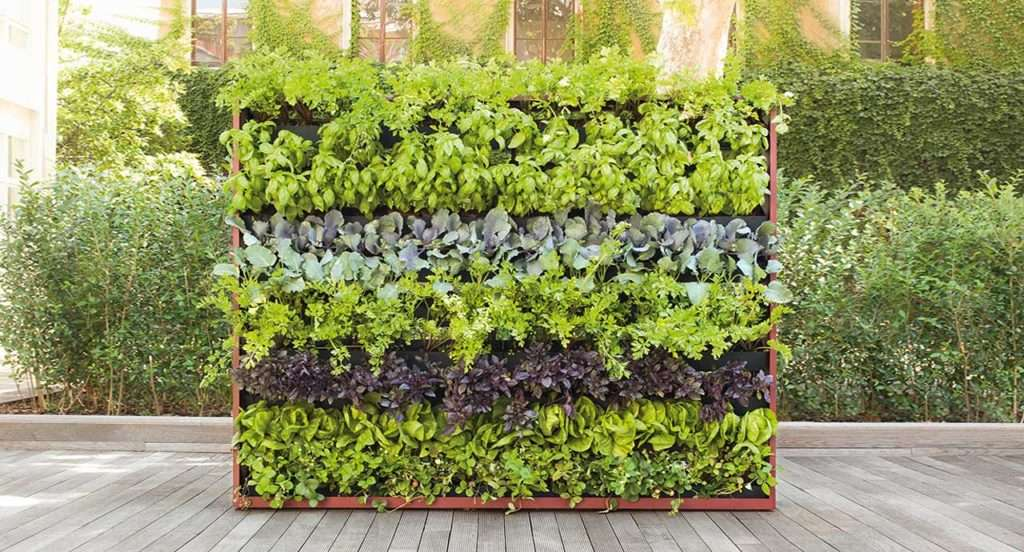 plants and vertical gardens by paola lenti
