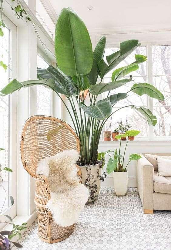 Arredare casa con le piante idee e spunti for Foto per arredare casa