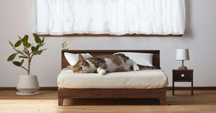 design per gatti giappone