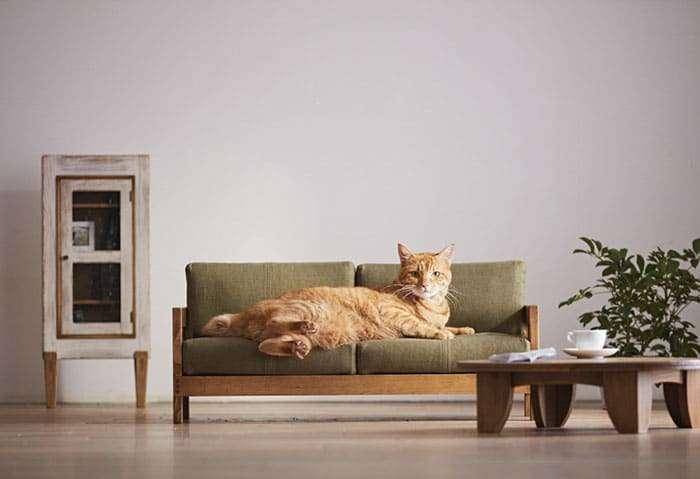 design per gatti in giappone
