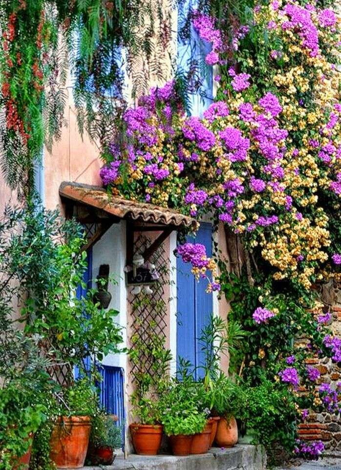 Outdoor con iante rampicanti nei giardini provenzali