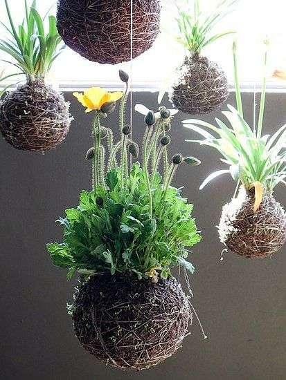 idee kokedama con fiori di campo