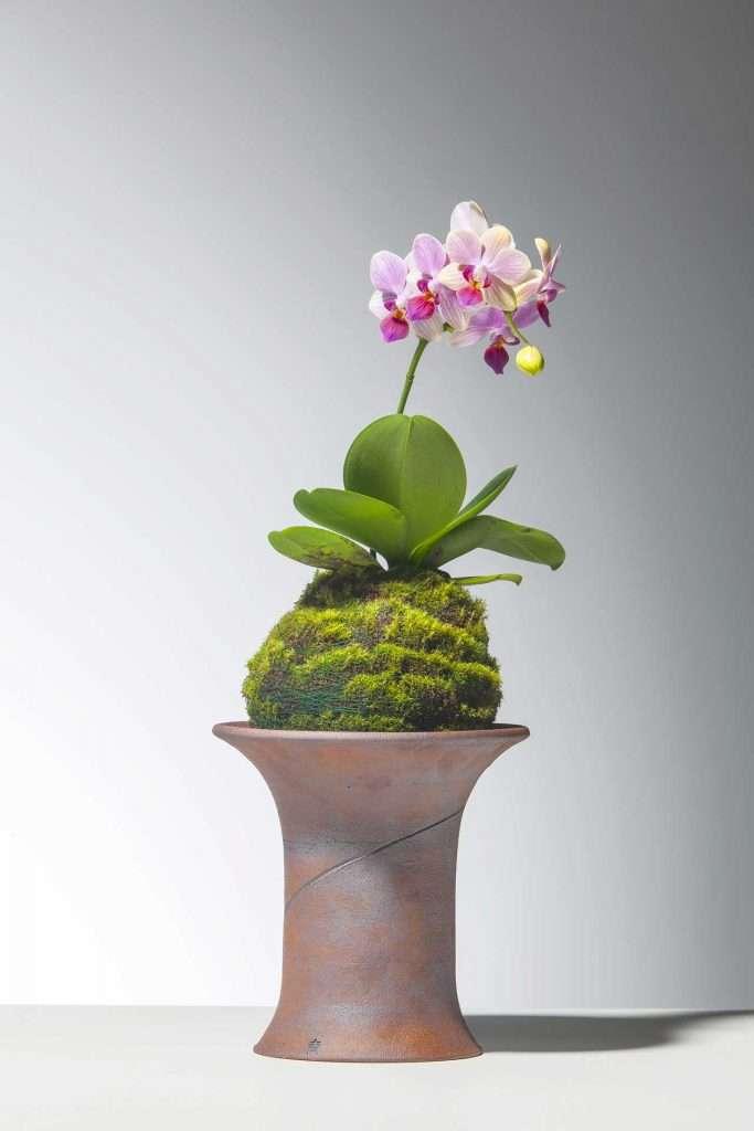 idee kokedama con orchidea