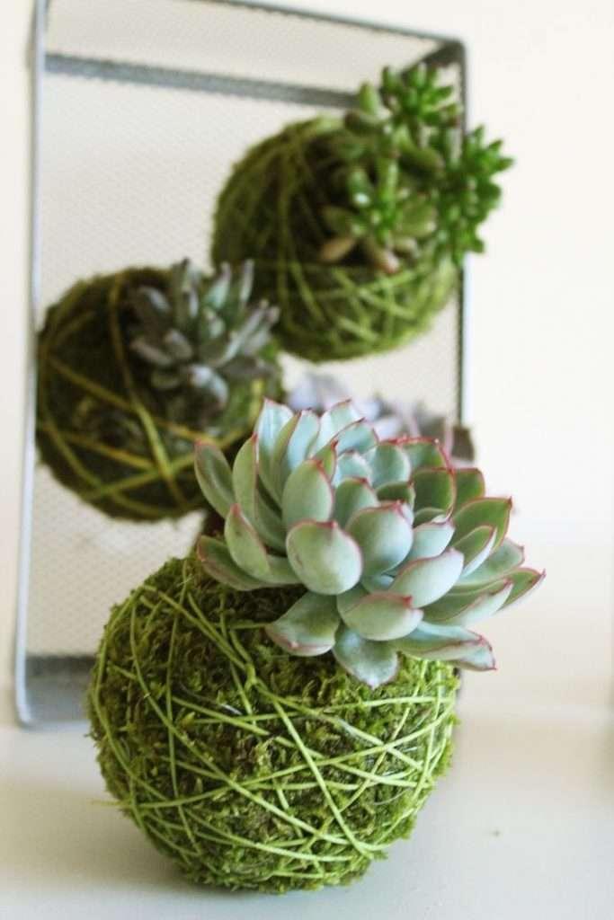 kokedama idee con piante grasse