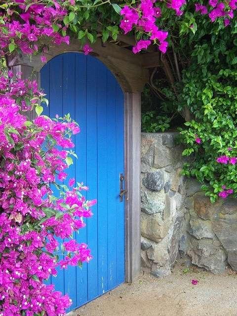 pianta per ingresso bougenville viola