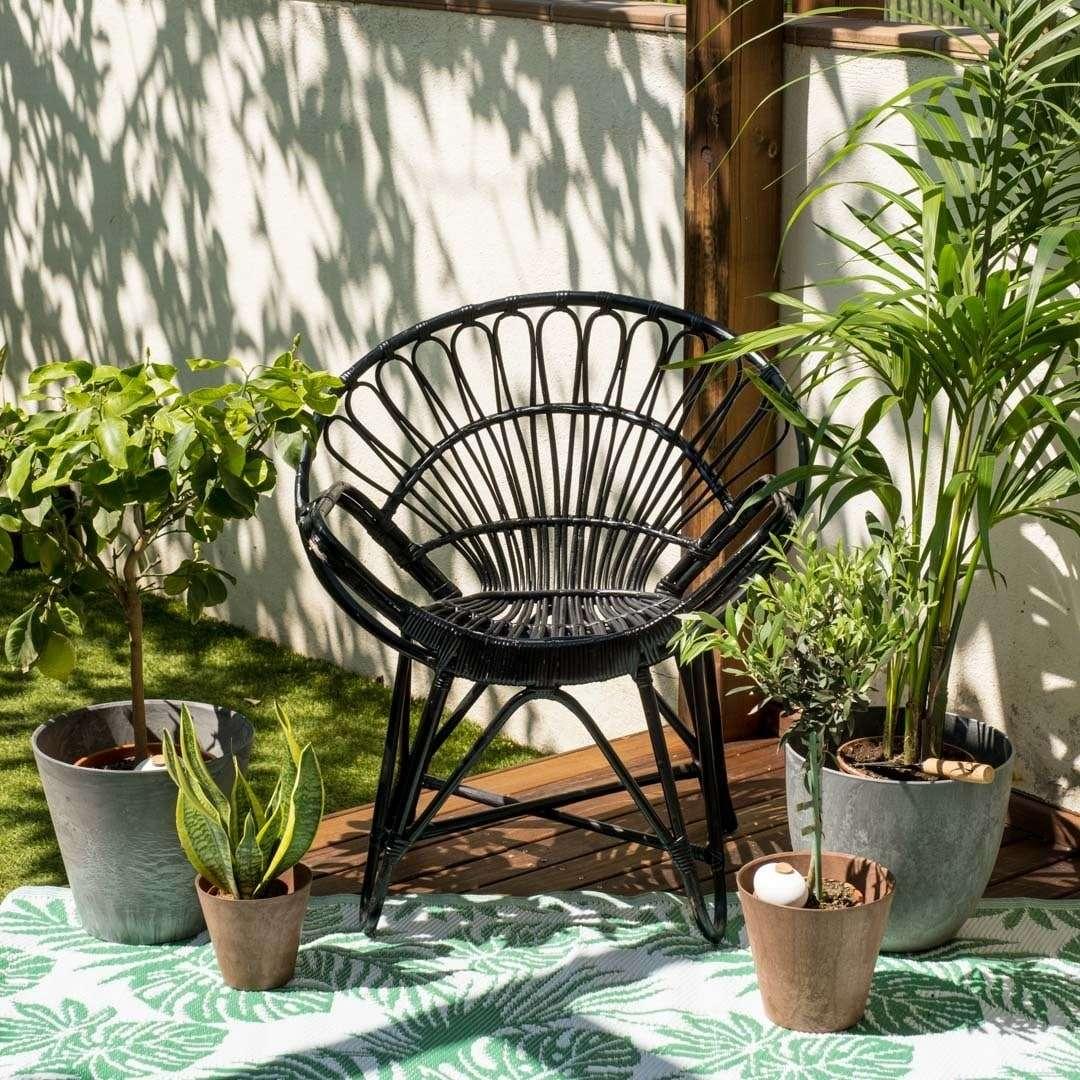 Godi dei benefici nel comprare piante online2