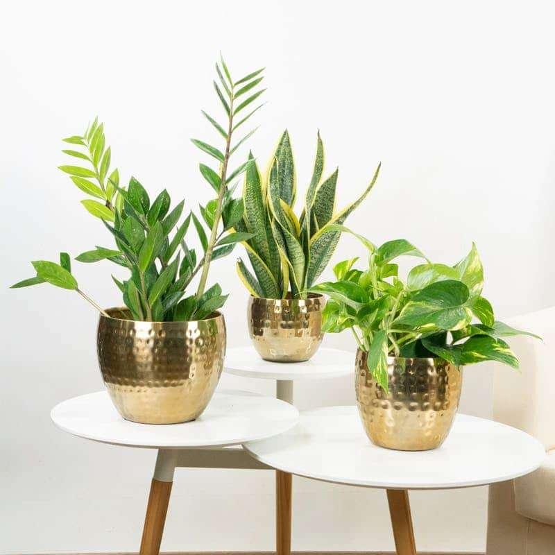 Godi dei benefici nel comprare piante online3